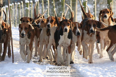 Hurworth Photography - Hound exercise in the snow image