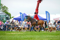 North Yorkshire County Show - Parading Hounds