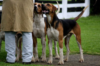 2012 Hurworth Hunt Puppy Show Practice