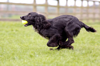 Gundog Photography 28.04.12