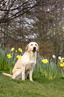 Gundog Photography 001