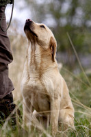 Gundog Galleries