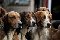 Stock Images - Hounds