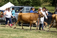 2013 Osmotherley Show 187