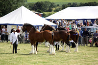 2013 Osmotherley Show 143