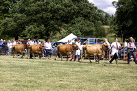 2013 Osmotherley Show 186