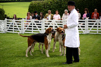 2014 Hurworth Hunt Puppy Show