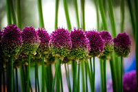 2015 RHS Tatton Park Flower Show